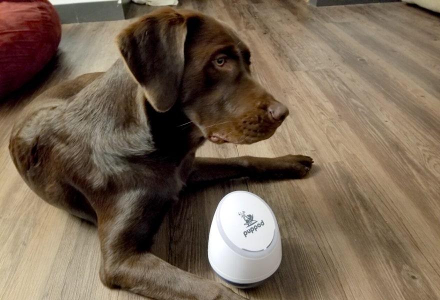 10-pet-tech-product-ideas-to-inspire-pet-startups-1