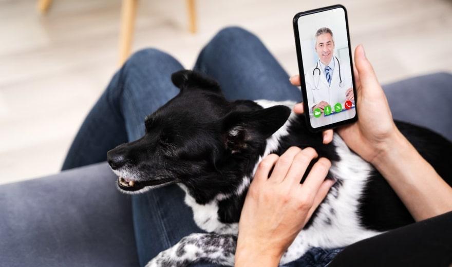 10-pet-tech-product-ideas-to-inspire-pet-startups-3